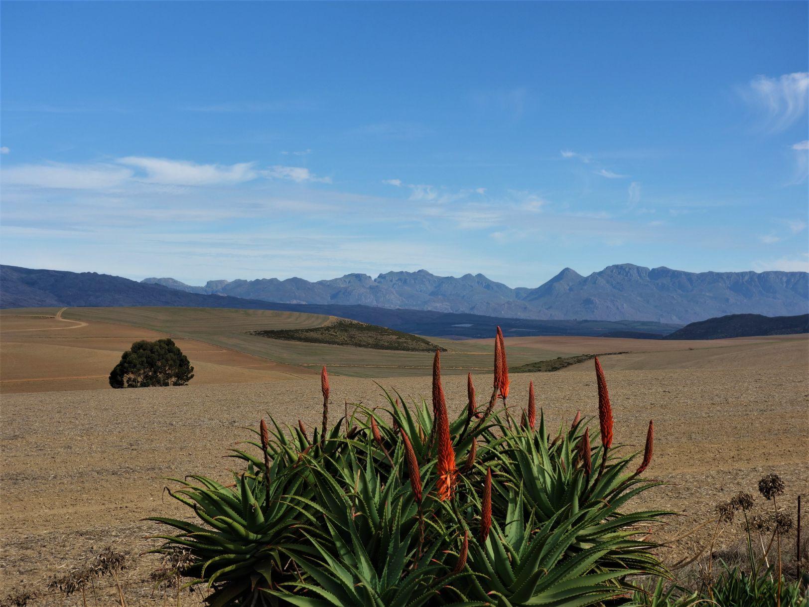 Krajina Západního Kapska