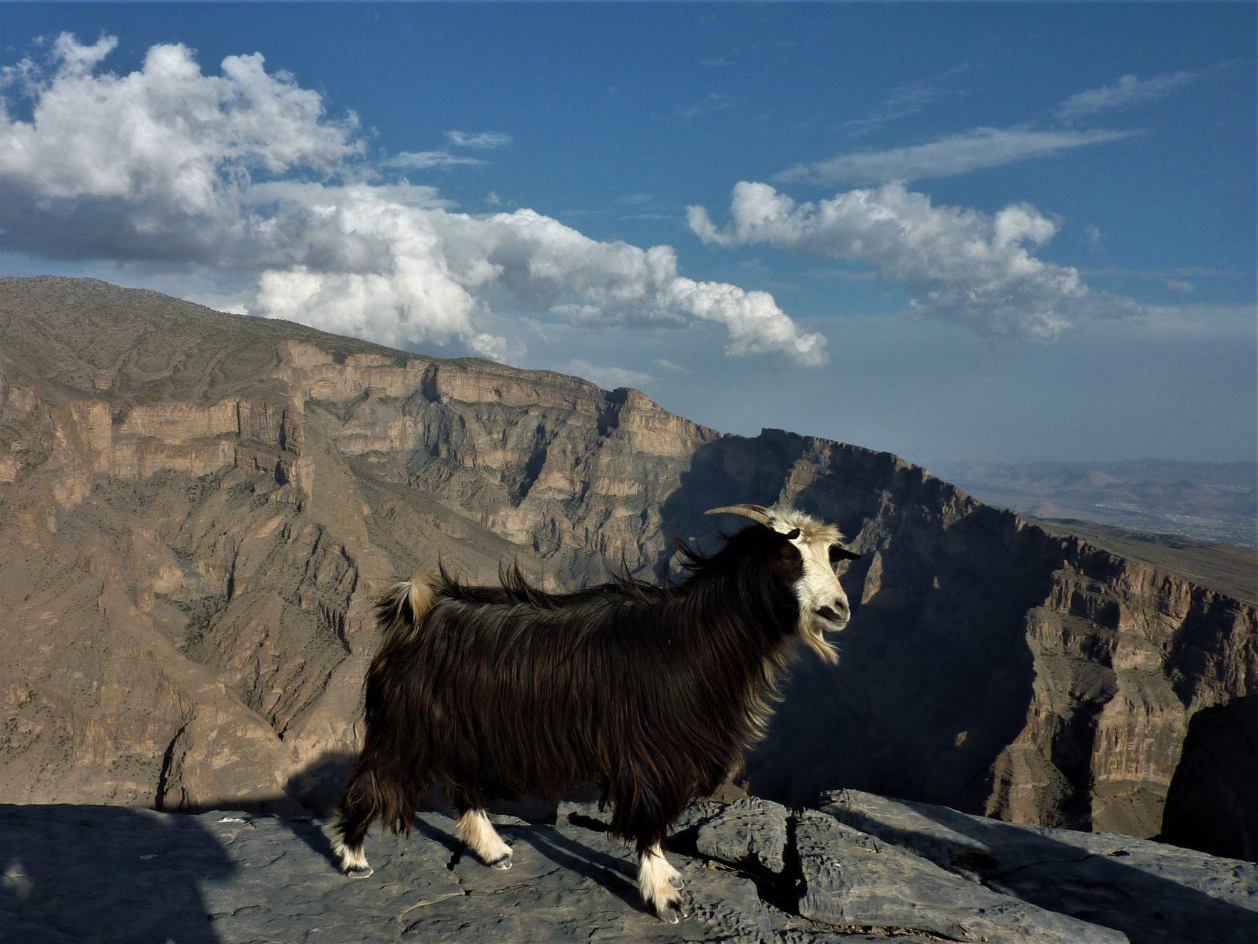 V kaňonu Wadi Nakhr