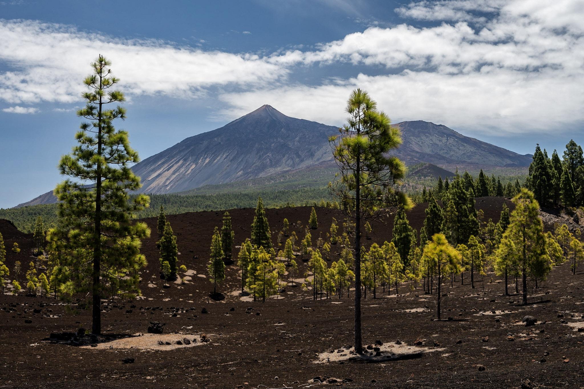 Magická krajina v oblasti vulkánů Garachico a Chinyero