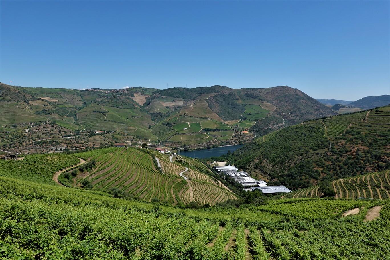 Vinice v okolí řeky Douro
