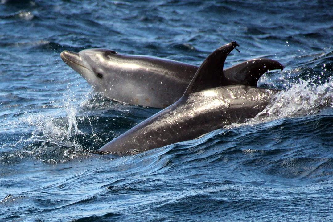 Pozorování velryb a delfínů