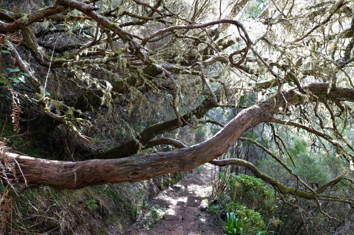 Vavřínový prales je jedinečný madeirský fenomén