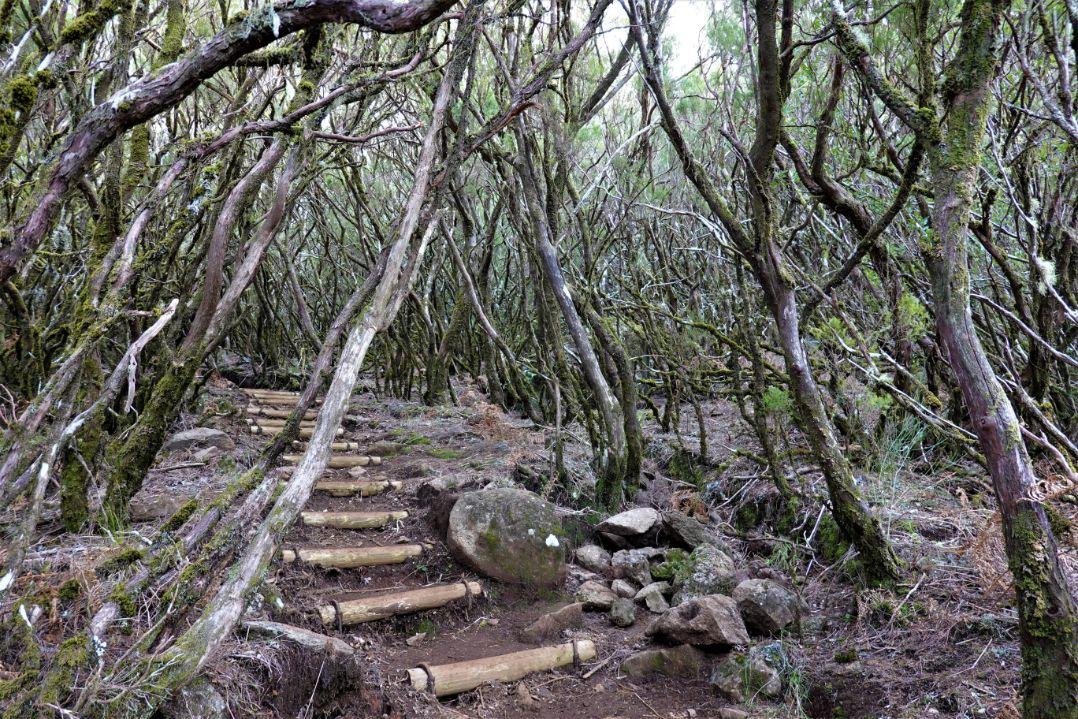 Vavřínový prales v oblasti Rabacalu