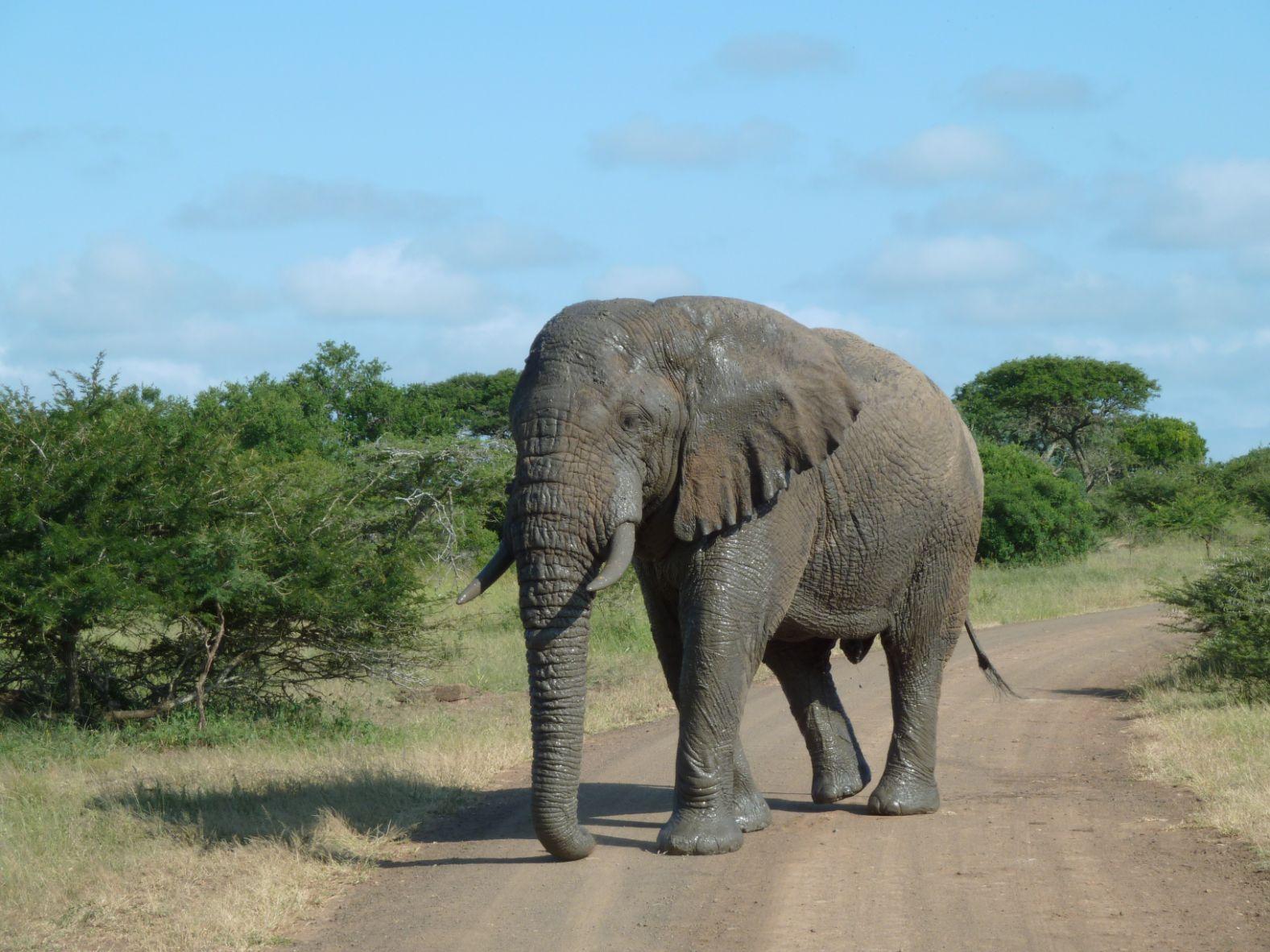 V Hluhluwe-Imfolozi mají přednost sloni