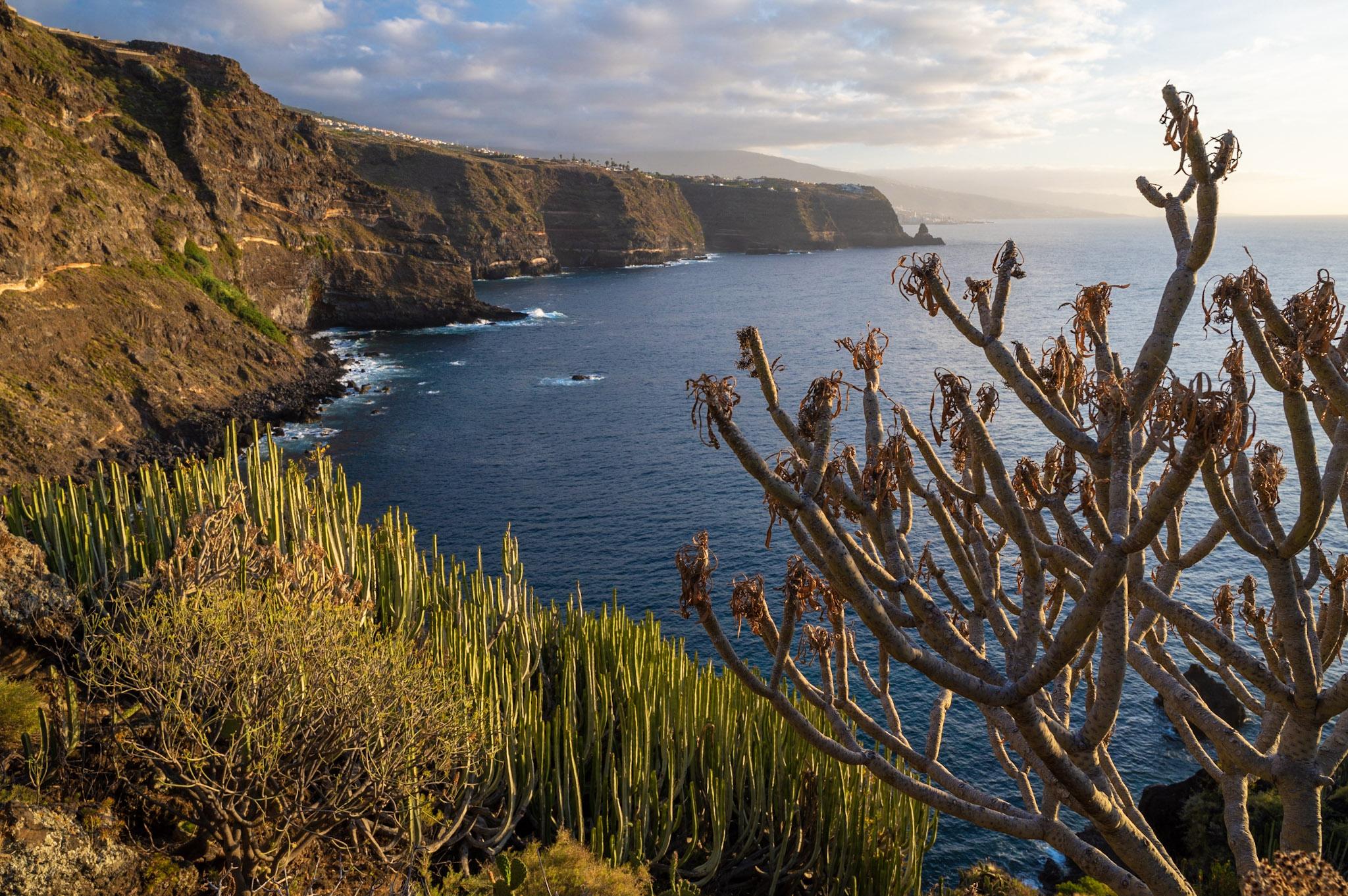 Rozeklané pobřeží Tenerife