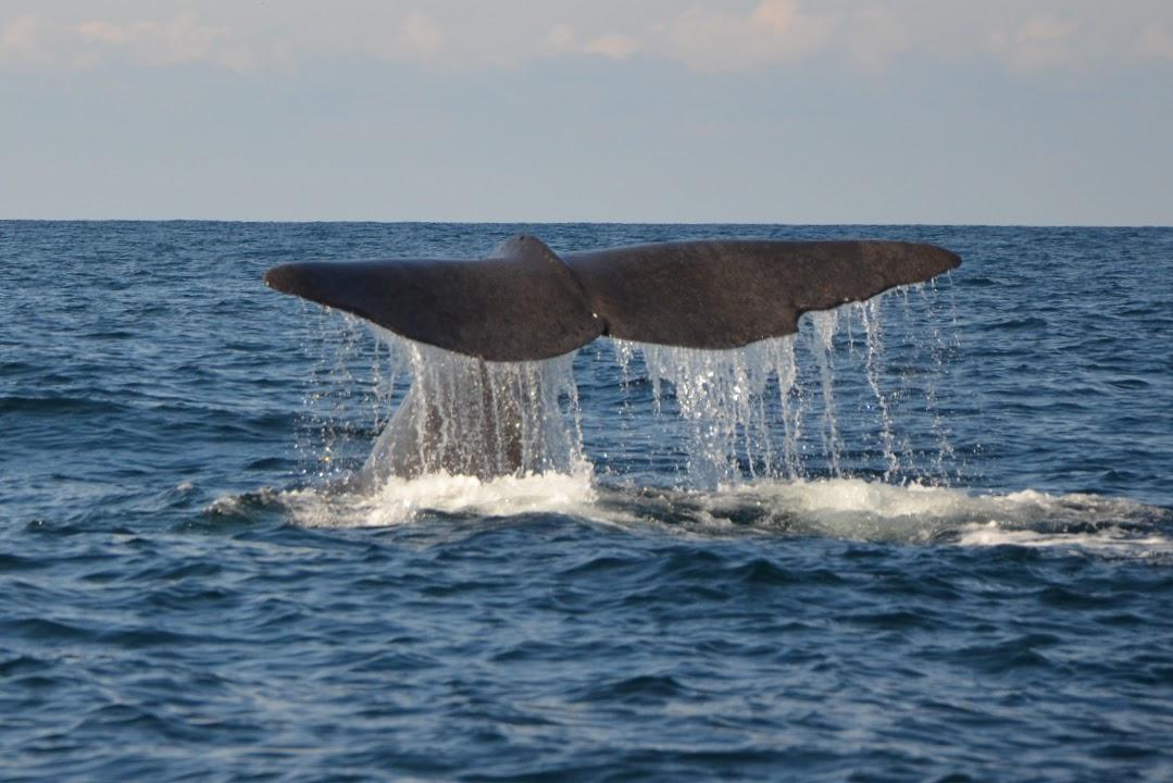 Velrybí safari