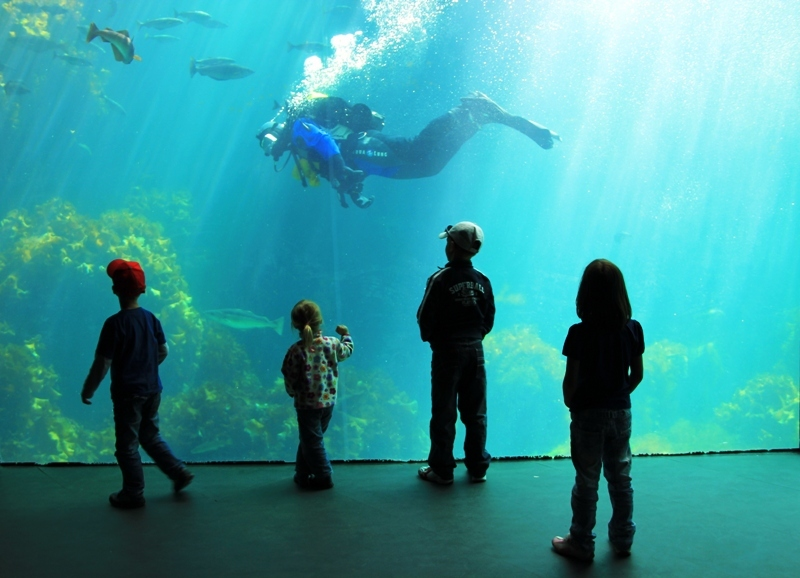 Alesund mořské akvárium