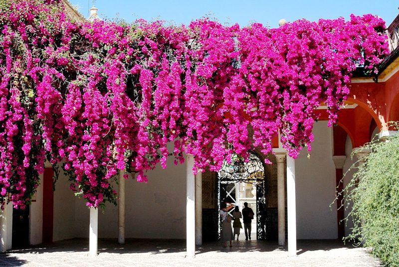 Andalusie- květinový vodopád
