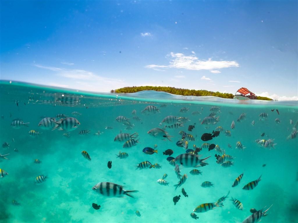 TANZÁNIE - ostrov Zanzibar s výlety 288242