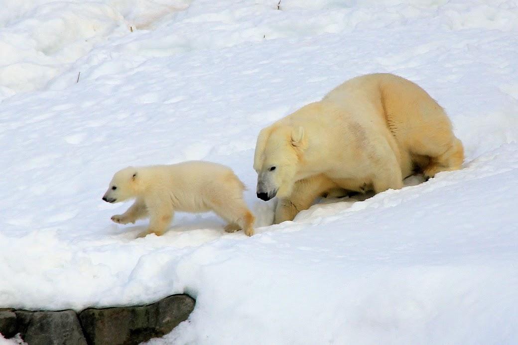 Výlet do arktické Ranua ZOO