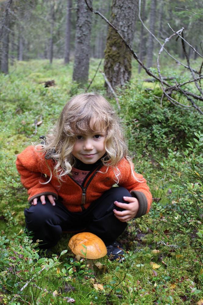 Na houbách, národní park Syöte
