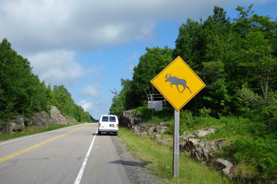 Upozornění na výskyt losů