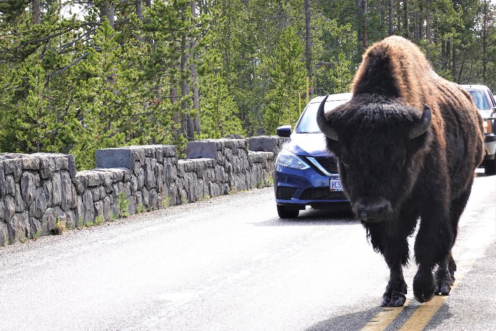 Zácpa na silnici v NP Yellowstone