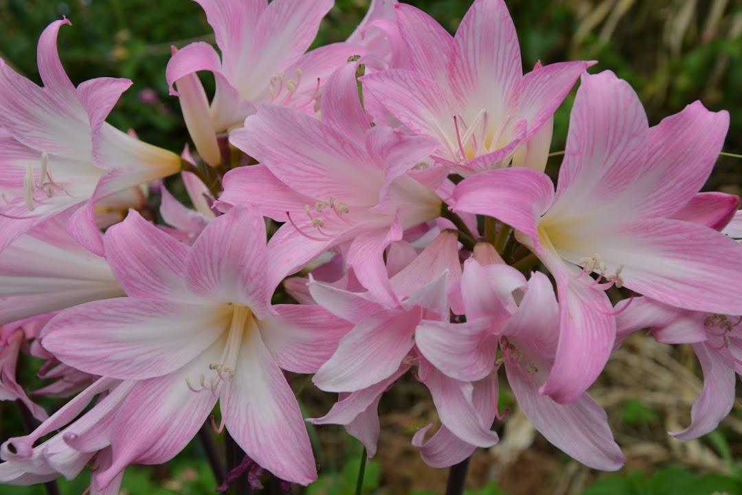 Květena Azor