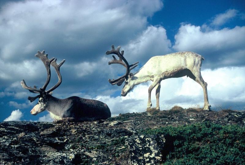 Sobi na severu Norska