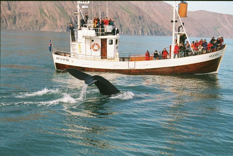 Z velrybího safari