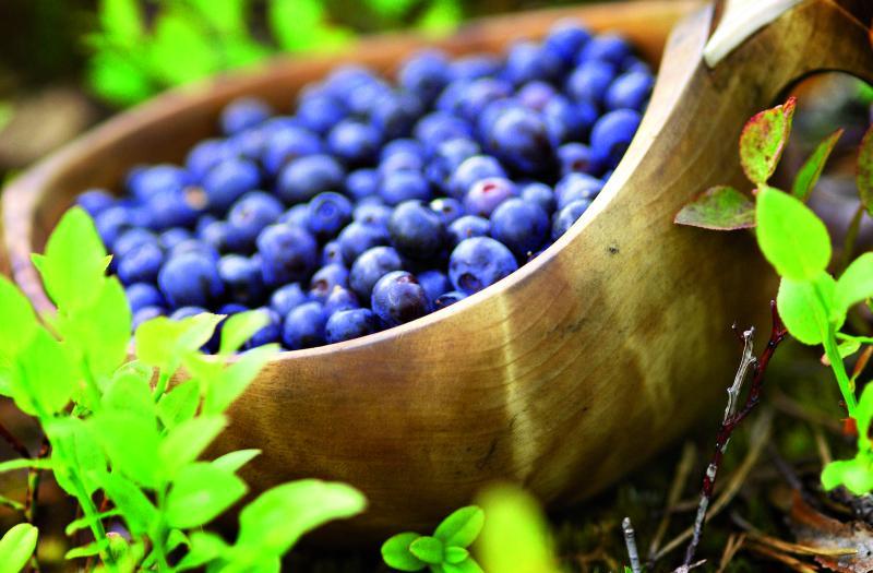 Vlochyně- typické plody finské krajiny