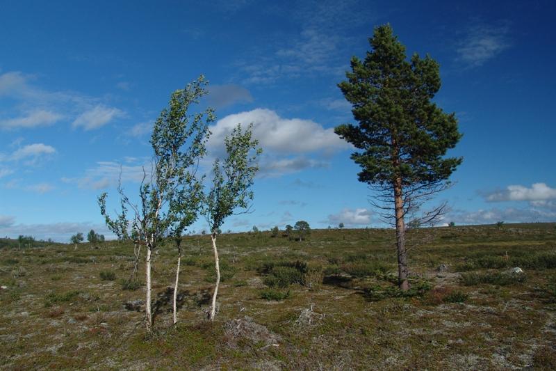 Finské Laponsko