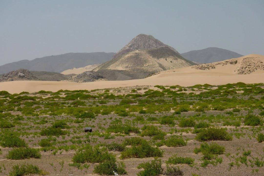 I poušť se může zelenat