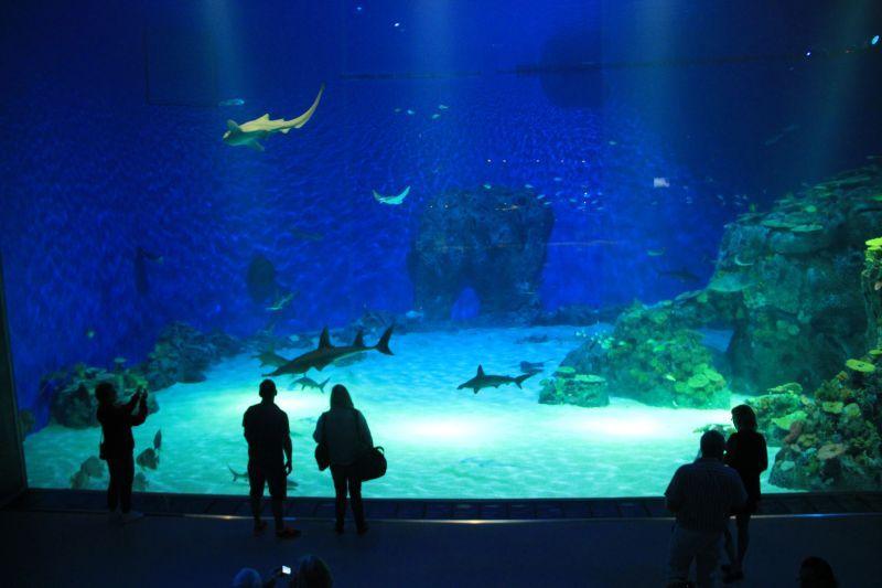 Kodaň odhalí i taje podmořského světa