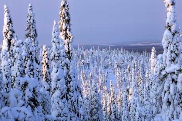 Krajina ve finském NP Iso-Syöte
