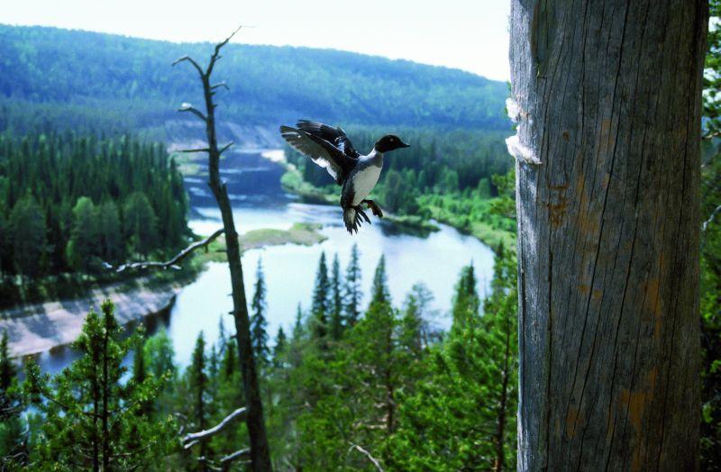 Letní Laponsko / Letni Laponsko - pohled do krajiny