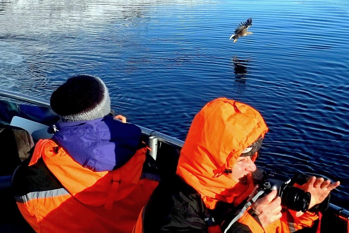 Pozorování mořských orlů