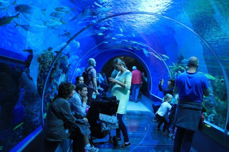 Podmořský svět okouzlí malé i velké