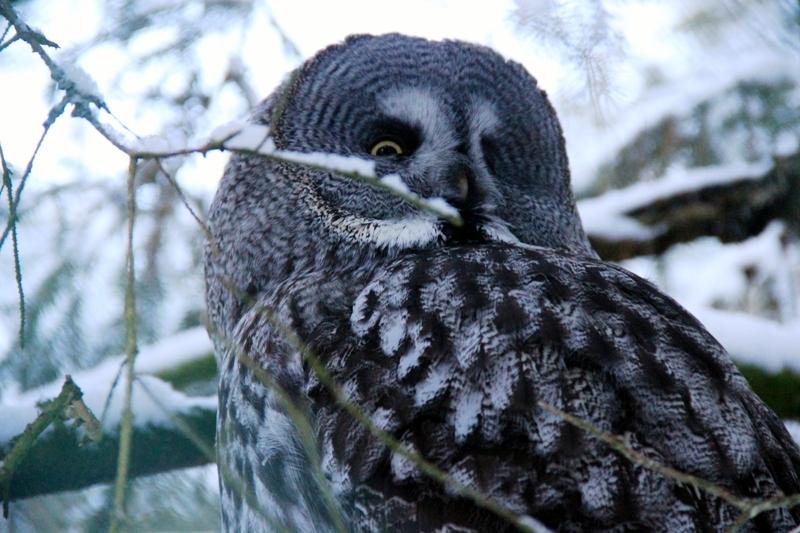 Polární zoo v Ranua ve Finsku