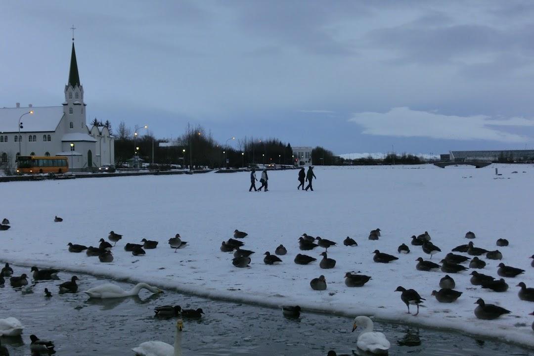 Rybník Tjörnin v Reykjavíku