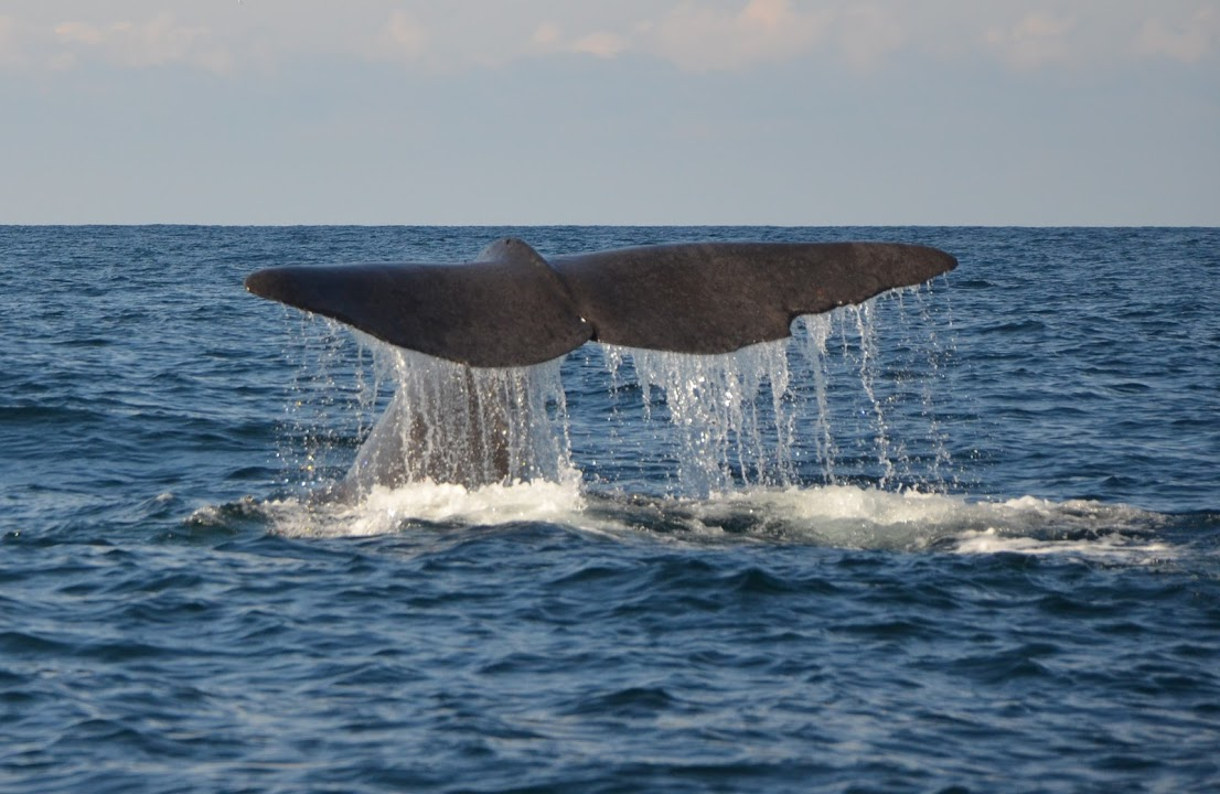 Senja, plavba za velrybami