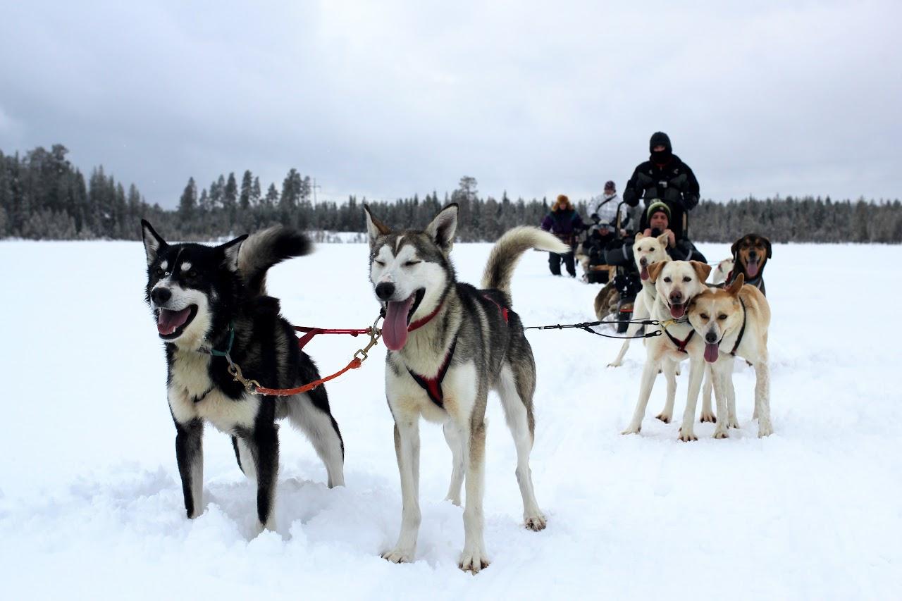 Severský dopravní prostředek psí spřežení
