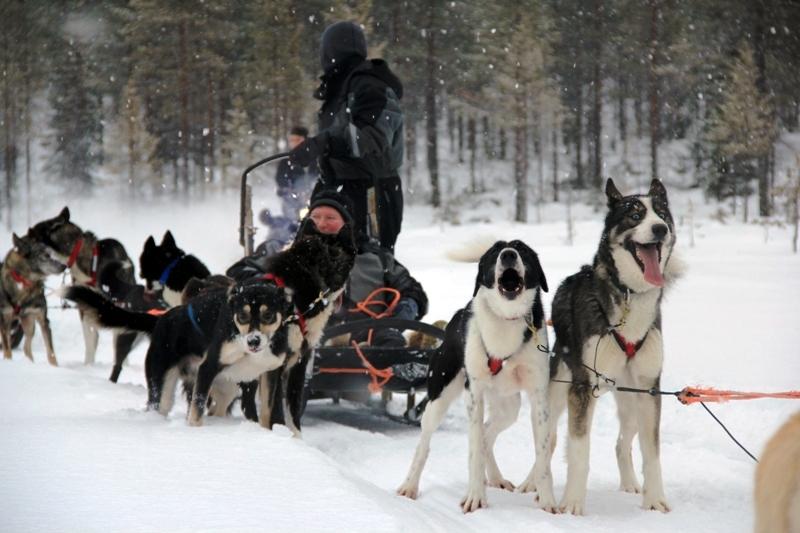 Severský dopravní prostředek - psí spřežení